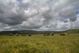 IMG_3143.jpg Gors Fawr Stone Circle - Mynachlog-Ddu, Pembrokeshire - © A Santillo 2011