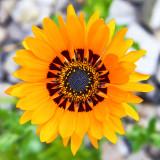 Flora - Botanic Gardens - Wales