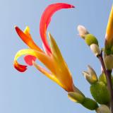 _MG_2003-Edit.jpg Unknown flower - Coleton Fishacre - © A Santillo 2007