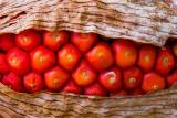 IMG_6532-Edit.jpg Unknown seed flower head - RHS Rosemoor - © A Santillo 2014