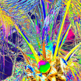 CRW_00753A.jpg Cocos nucifera - Coconut palm - Humid Tropics Biome - © A Santillo 2004