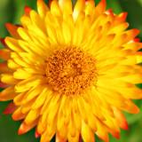 CRW_02319B.jpg Seychells Bizzy Lizzy - Warm Temperate Biome - © A Santillo 2004