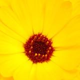 IMG_2840a.jpg Dhalia - Warm Temperate Biome - © A Santillo 2010