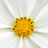 IMG_2841a.jpg Unknown Flower - Warm Temperate Biome - © A Santillo 2010