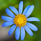 IMG_2855.jpg Unknown Flower - Warm Temperate Biome - © A Santillo 2010