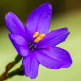 IMG_5783.jpg Unknown Flower - Mediterranean Biome - © A Santillo 2014