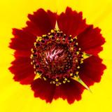 IMG_6548-Edit.jpg Unknown Flower - outdoor Biome - © A Santillo 2014
