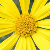 IMG_7314-Edit.jpg Unknown flower - Mediterranean Biome - © A Santillo 2017
