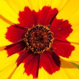_MG_2360.jpg Unknown Flower - Warm Temperate Biome - © A Santillo 2008