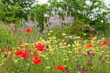 IMG_7462-Edit.jpg Wild flower meadow - The Garden House - © A Santillo 2017