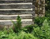 NC Botanical Garden Chapel Hill