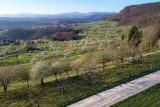 Kirschblüten Nuglar