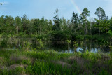 Etoniah Creek State Forest