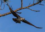Birds of Etoniah