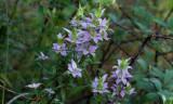 Flowers of Etoniah