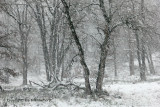 Sneeuwbos - Snowforest