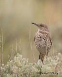 Birds of Piceance/East Douglas