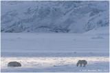 Svalbard in winter 2017