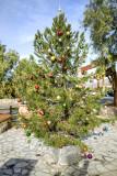 DV Christmas Tree Furnace Creek