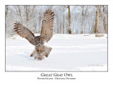 Great Gray Owl-205