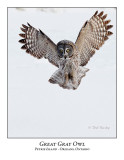 Great Gray Owl-207