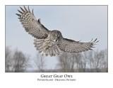 Great Gray Owl-208