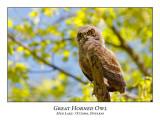 Great Horned Owl-063