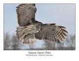 Great Gray Owl-210