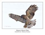 Great Gray Owl-211