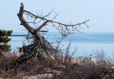 April in Connecticut - Hammonasset Beach State Park
