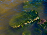 Rock covered with algae under water