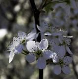 April in Connecticut - Hammonasset Beach State Park