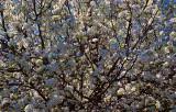 Spring is bursting forth