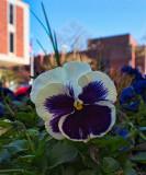 Flowers in the city - B&W below