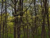 April in Connecticut