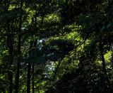 Summer light through the trees