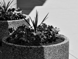 Flowers in black & white