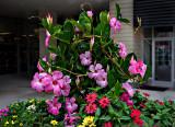 Outdoor display - Bishop's Corner
