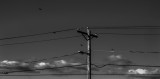 electric lines, birds and clouds