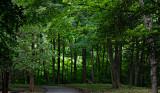 late summer greenery
