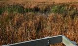 tidal marsh