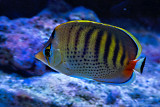 fish in fish tank
