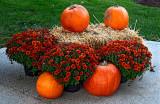 Halloween - it's acoming