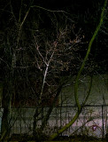 'winter', night lighting, parking lot, tree