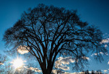 tree in winter at sundown