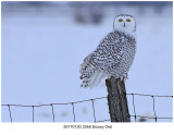 20170120 3348 Snowy Owl.jpg