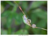 20170821  0086  SERIES - Gray Tree Frog.jpg