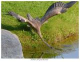 20170920  2240  SERIES - Great Blue Heron.jpg