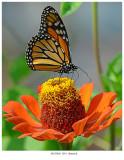 20170920  2051  Monarch.jpg