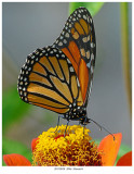 20170920  2046  Monarch.jpg